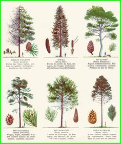 small garden plans How To Grow Trees And Shrubs, Trees To Plant, Garden Trees, Garden Plants, Tree Identification, Illustration Botanique, Baumgarten, Nature Journal, Tree Leaves