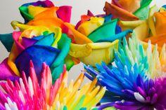 Flori în culorile curcubeului, o invenție a olandezului Peter van de Werken