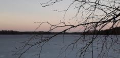 Kevättä ja lehtiä odotellessa #spring #april #lake #ice #pink #evening #birch Finland, Birch, Silhouette, Mountains, Spring, Nature, Travel, Voyage, Silhouettes