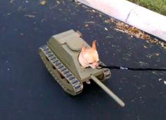 chihuahua as a tank | ... Quiero Tanko Bells! (I Got Nothing): Homemade Chihuahua Tank Costume