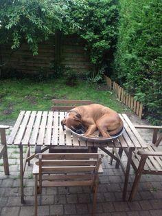 If I fits I sits!