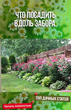 What to plant along the Что посадить вдоль забора. What to plant along the fence. Tall Flowers, Growing Flowers, Planting Flowers, Landscape Plans, Landscape Design, Home Vegetable Garden, Home And Garden, Organic Gardening, Gardening Tips