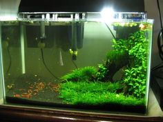 Low Tech Tank Show-and-Tell (low tech can be lush, too! & - The Planted Tank Forum Aquascaping, Aquarium Aquascape, Planted Aquarium, Nature Aquarium, Aquarium Fish Tank, Fish Tanks, Aquarium Set, Fish Tank Terrarium, Aquarium Terrarium
