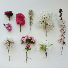 Spring blossom collection from my garden x