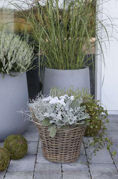 Inngangsparti for hverdag og fest Terrace Garden, Garden Plants, Fall Containers, Garden Boxes, Garden Inspiration, Container Gardening, Fall Decor, Entrance, Garden Design