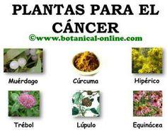 Plantas para el cancer, anticancerigenos naturales                                                                                                                                                                                 Más
