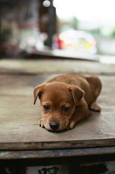 puppy eyes --