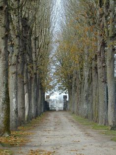 Allee in the Loire Valley, France