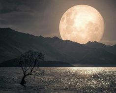 Red Moon Eclipse, Wicca, Tarot, Moon Pictures, Pretty Pictures, Good Night Moon, Moon Magic, Beautiful Moon, Beautiful Flowers