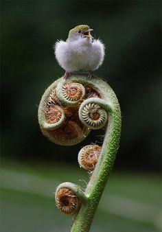 """heinzplomperg: """" Fauna & Flora #plomperg """""""