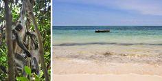 Affen auf Sansibar © Carina Dieringer Carina, Strand, Beach, Water, Outdoor, Tanzania, Gripe Water, Outdoors, The Beach