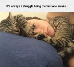 Ah... but what a wonderful struggle! And all that sleep warm fur to rub your face in. I envy you!