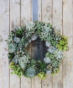 DIY COLLAB // veronica valencia X uncovet. holiday living succulent wreaths! DIY here: http://blog.uncovet.com/tagged/Weekend-Warrior | Buy one here: http://uncovet.com/living-succulent-holiday-wreath
