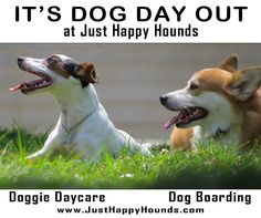 It's Dog Day Out at Just Happy Hounds  |  #doggiedaycare   |    dog boarding   |   205.777.3699