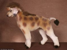 giraffe dog creative