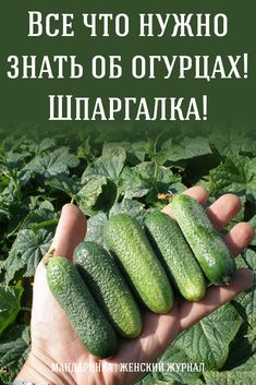 All you need to know about cucumbers! Plant Logos, Bedroom Plants, Growing Plants, Health Remedies, Vegetable Garden, Indoor Plants, House Plants, Need To Know, Garden Design