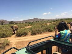 Giraffe, Elephant, Ostriches, Cheetahs, Crocodiles, Hyena, Leopards, Zebras, Animal Kingdom