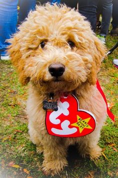 Insanely Cute Dog Halloween Costumes: TY Beanie Baby Dog Costume | If you're looking for the best dog Halloween costumes, such as dog Halloween costumes DIY, DIY Halloween costumes for dogs, small dog Halloween costumes funny and more! So, if you're in the mood for some easy Halloween costumes for dogs funny, check out these cute Halloween costumes for dogs and funny dog costumes halloween! #doghalloweencostumes #halloweencostumesfordogs #halloweencostumes #dogs #dogcostumes#dogcostumeshalloween Big Dog Halloween Costumes, Small Dog Costumes, Cute Dog Costumes, Halloween Fun, Costume Ideas, Woman Costumes, Couple Costumes, Group Costumes, Couple Halloween