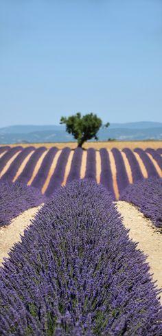 France www.facebook.com/loveswish