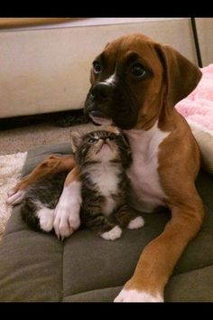 Boxer and his kitty friend.