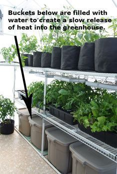 Fill large buckets with water to collect heat during the day and slowly release it at night to help keep the greenhouse temperature warmer. #greenhousefarming