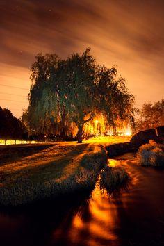 Golden Brook by ~will-jum