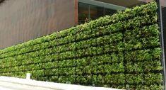 Grüne Wand Ideen-Windschutz Terrasse
