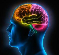 imagenes neurociencias - Buscar con Google
