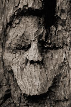 'Dead Trees Can't Talk | ©Hotel Lyric