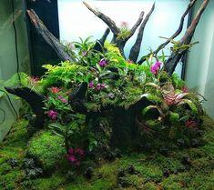 Yosun ve çiçek uyumlu bir teraryum Lizard Habitat, Frog Habitat, Reptile Habitat, Reptile Terrarium, Moss Terrarium, Planted Aquarium, Aquarium Fish, Indoor Water Garden, Cute Reptiles