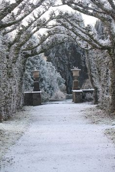 best Winter in Ireland images on Pinterest