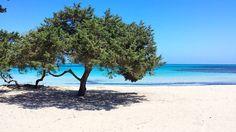 #sardegna#stintino2016#stintino#mare#spiaggia#spiaggiadelgabbiano#ginepri