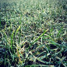 #poranna #trawa - #morning #grass - #nature #natura #zielono #green #outdoor