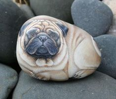 pug painted on a rock