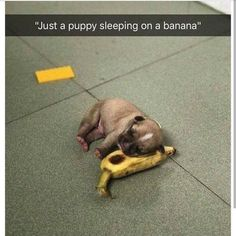 Dog Meme Funny Animals With Captions, Funny Captions, Funny Animal Pictures, Cute Funny Animals, Cute Baby Animals, Funny Cute, Dog Pictures, Animals And Pets, Cute Cats