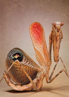 Igor Siwanowicz Insect Photography