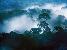 Danum Valley, Malaysia (Borneo) - This beautiful... | Outstanding Places