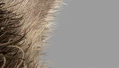 Zootopia's Fur Technology - Computer Graphics & Digital Art Community for Artist: Job, Tutorial, Art, Concept Art, Portfolio