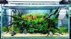 Aquascaping contest at CIPS Exhibition in Guangzhou China.  #FAAO #Aquascaping #Planted #Aquarium #Aquatic #Plant #Freshwater #aquascape #plantedtank #plantedaquarium #CIPS #China #AquascapingMakesMyWorldGoRound