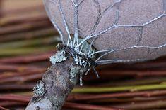 Suvikumpu: HAVUPALLOPUU - ohje Holidays And Events, Moth, Dandelion, Christmas Wreaths, Insects, Bird, Flowers, Crafts, Animals