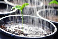 Si dejas de regar a una planta que pasa ? Y si la planta necesita ser regada, y recibir ciertos cuidados minimos con cierta frecuencia para verse bien y resplandeciente? Obviamente si cuidar planta…