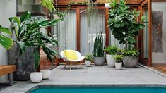 Create This Tropical Garden At Your Place. Nicholas Watt.