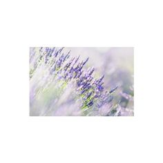 A Designer's Guide to the Color Lavender: Its Shades and Their... ❤ liked on Polyvore featuring backgrounds and pictures