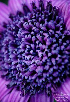 Purple - Paars