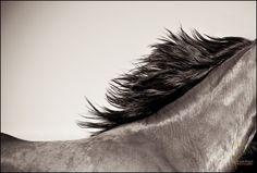 Look deep into nature, and then you will understand everything better. - Albert Einstein   #horses #horse #equine #fineart #nature #interiordesign #homedecor #followforfollow #follow #art #walldecor  #prints #interiordesigners #art #detail  #equestriandecor #thebestofequestrian #outdoors #OBX