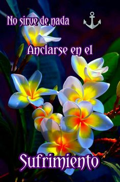 Plants, Frases, Good Night Sweet Dreams, Plant, Planting, Planets