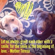 Wit And Wisdom, Mother Teresa, Labradors, Dog Stuff, Labs, Laughter, Bear, Friends, Quotes