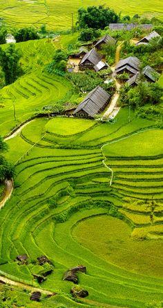 Rice fields on terraced of Mu Cang Chai, YenBai, Vietnam. http://hoianfoodtour.com/