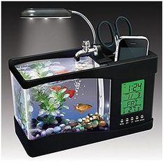 dorm pet idea: fish!