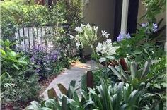 Image result for sub tropical garden design ideas